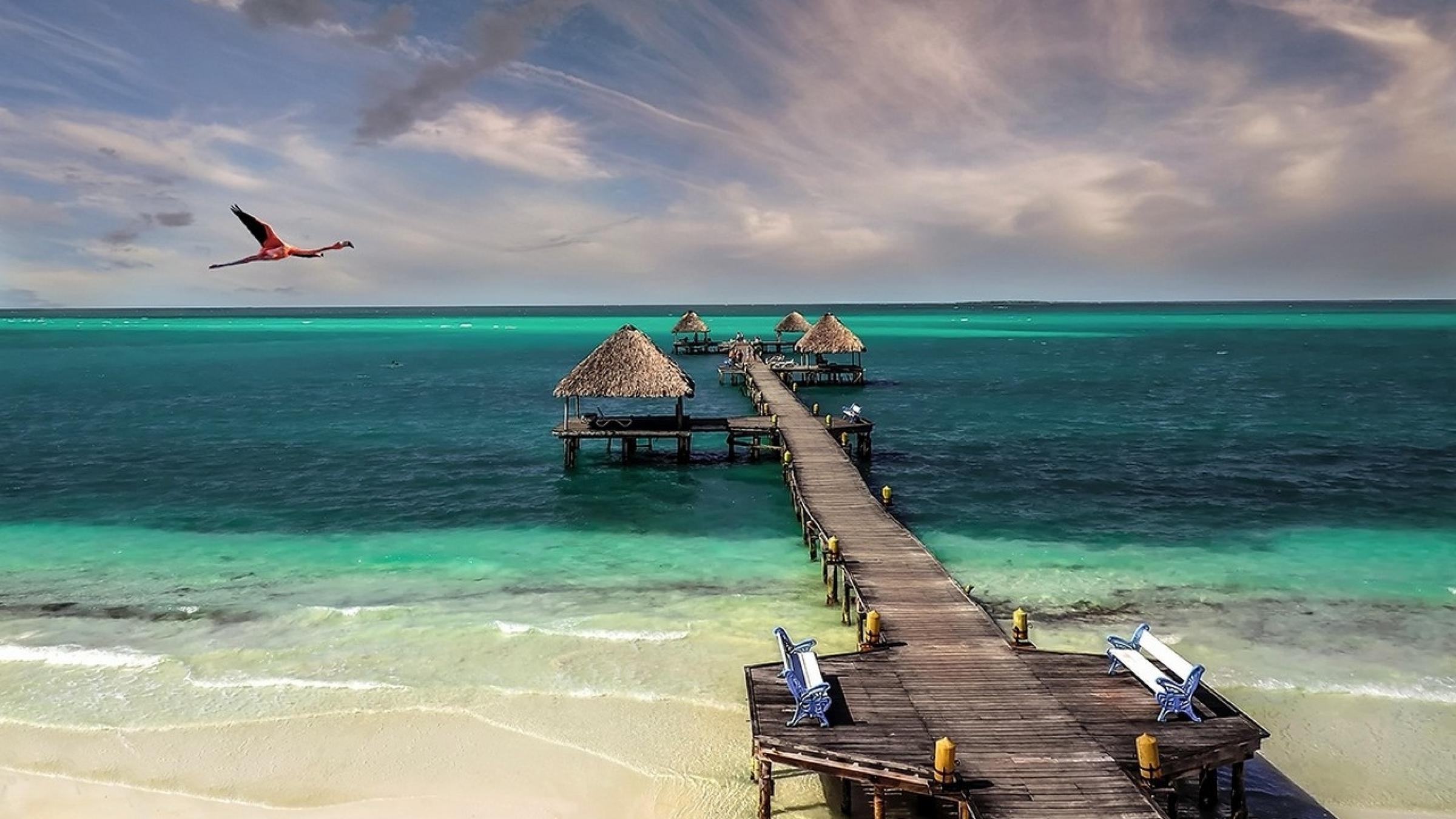 Cuba beach bird sea sand (2400x1350)
