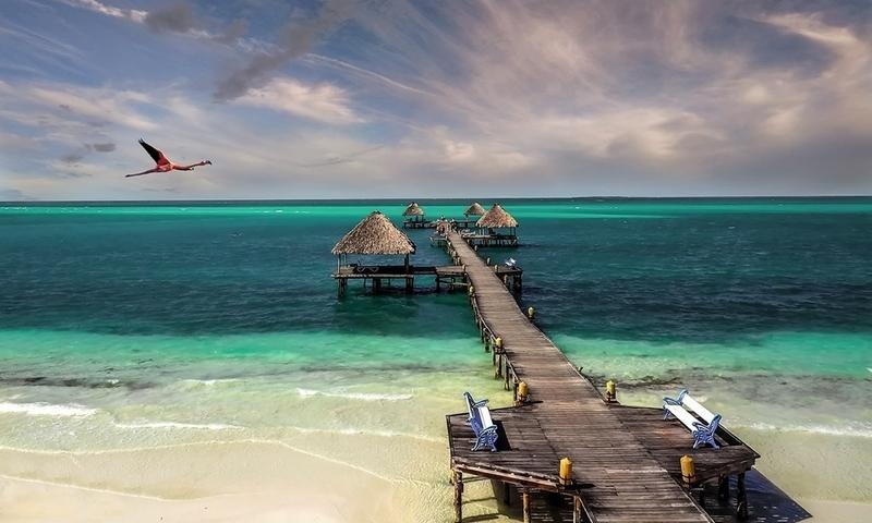 Cuba beach bird sea sand (800x480)