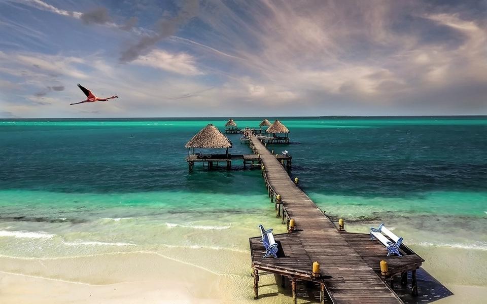 Cuba beach bird sea sand (960x600)