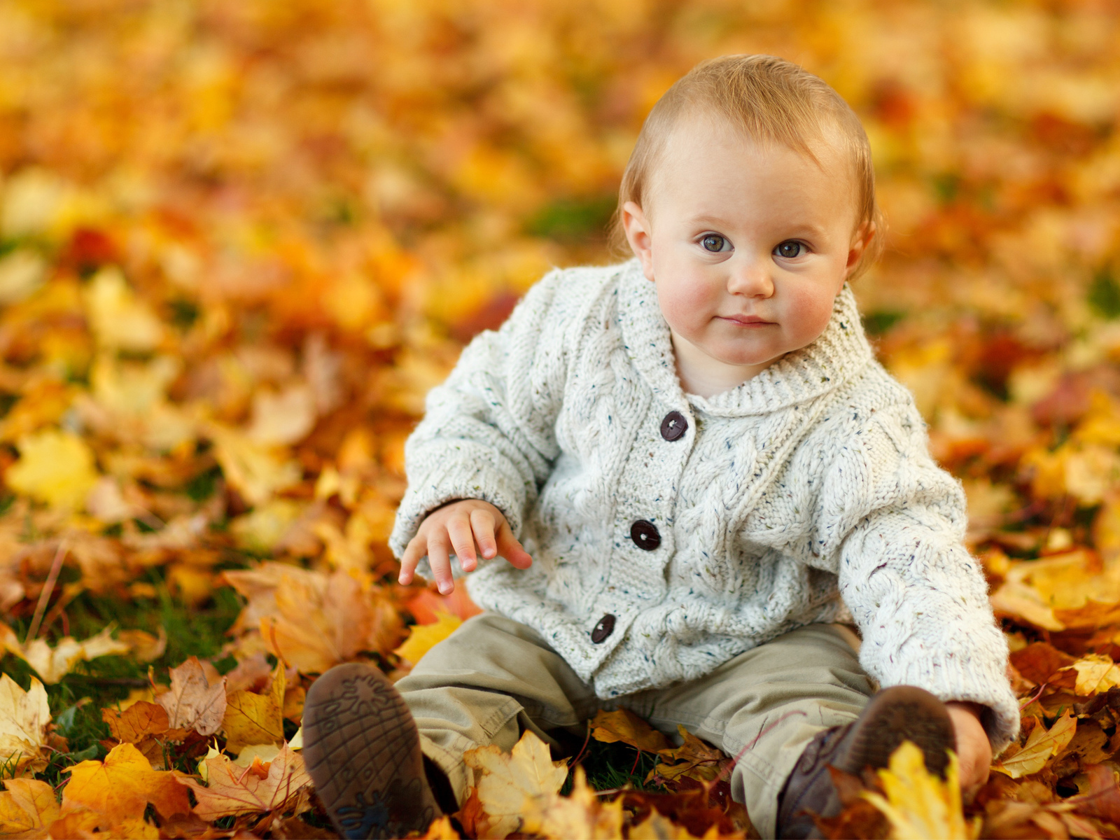 Cute Baby Boy Autumn Leaves (1600x1200)