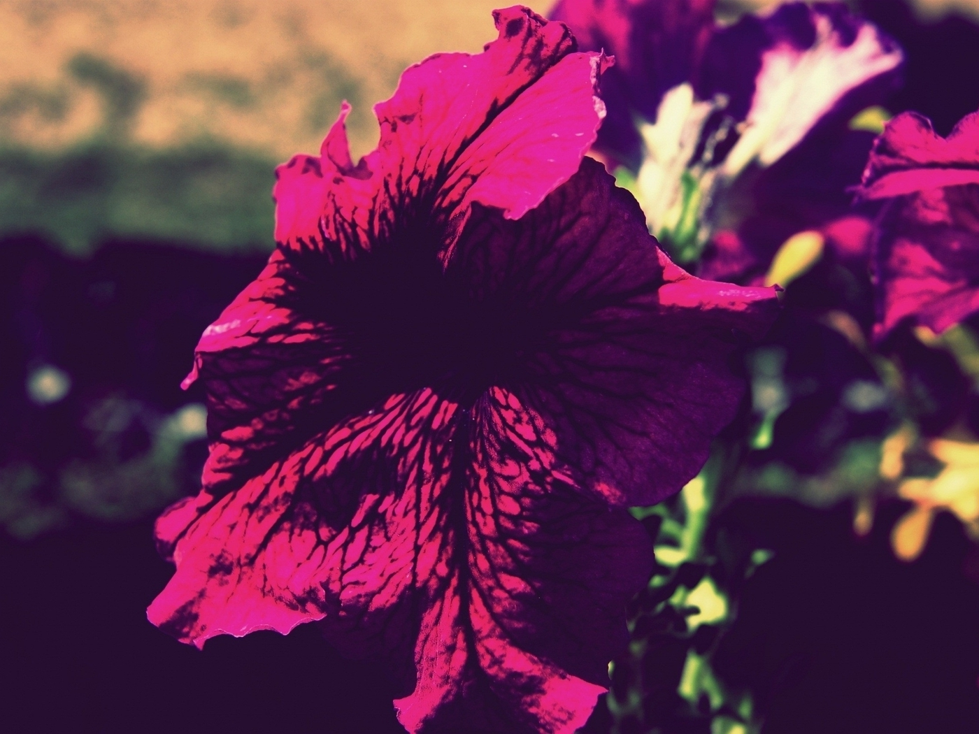 Flowers vintage (1400x1050)