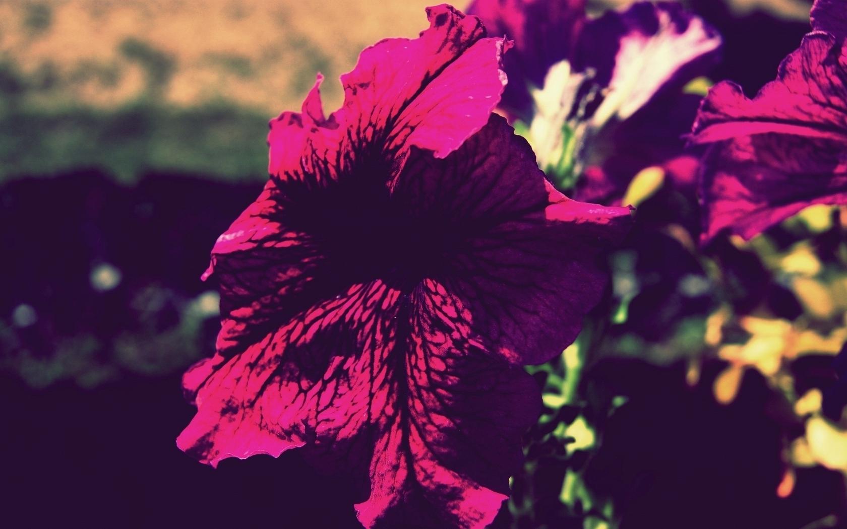 Flowers vintage (1680x1050)
