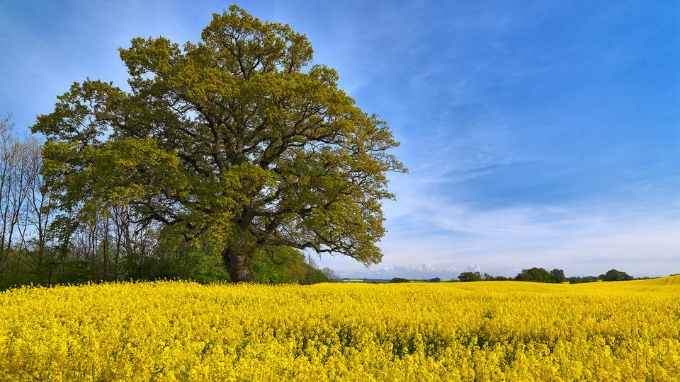 Swedish Fields (960x540)