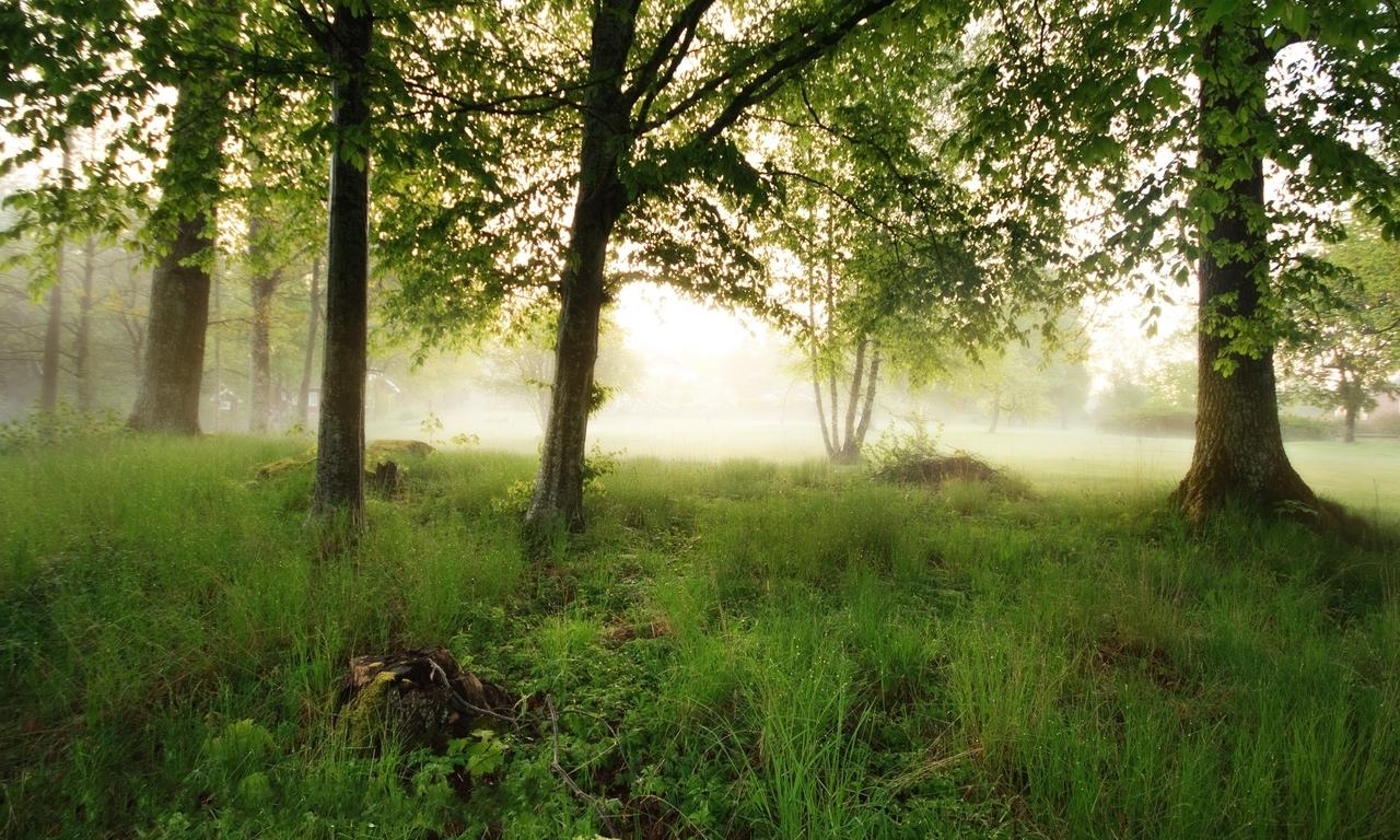 Trees fog (1280x768)
