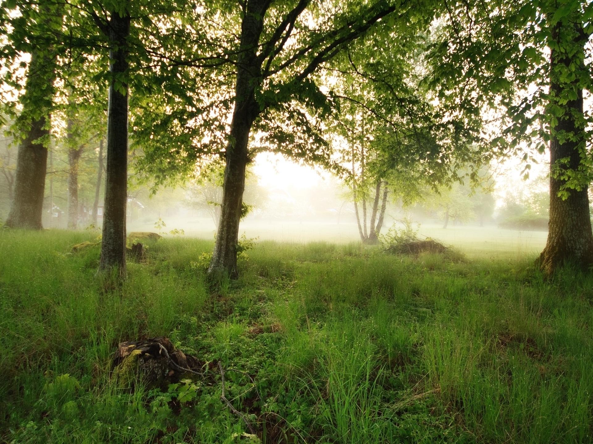Trees fog (1920x1440)