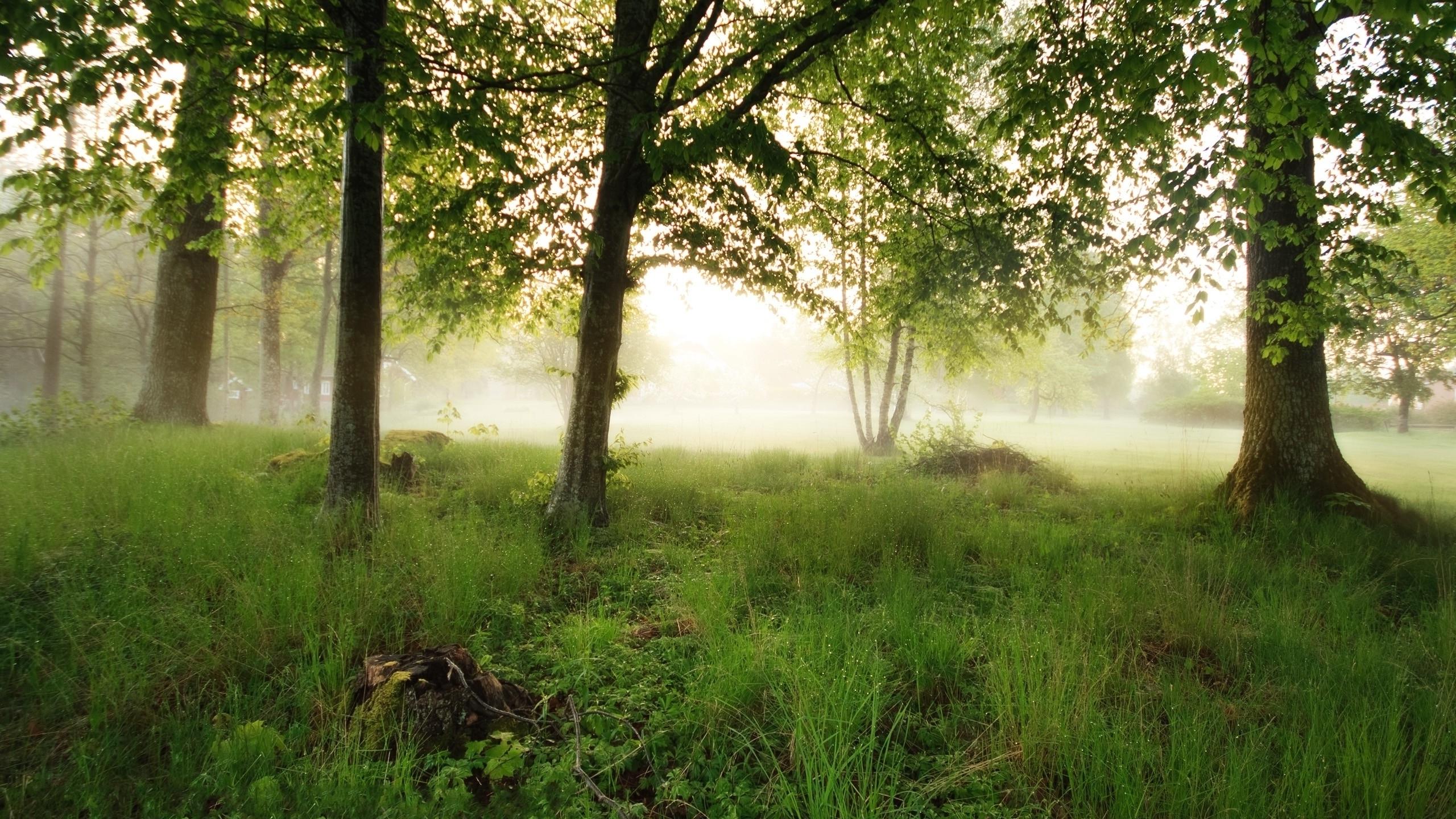 Trees fog (2560x1440)