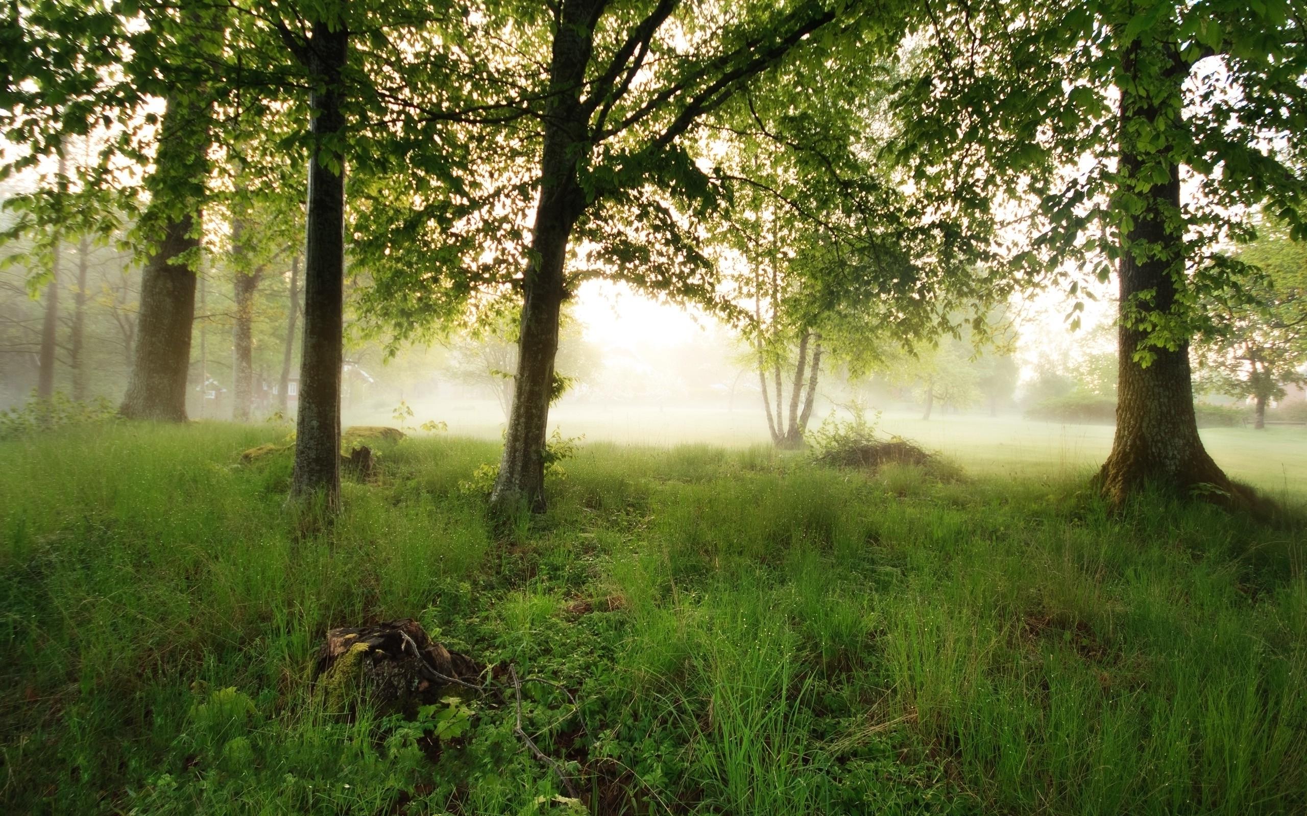 Trees fog (2560x1600)