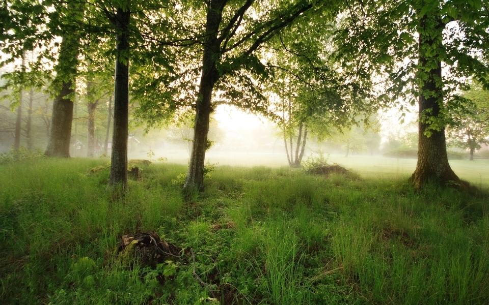 Trees fog (960x600)