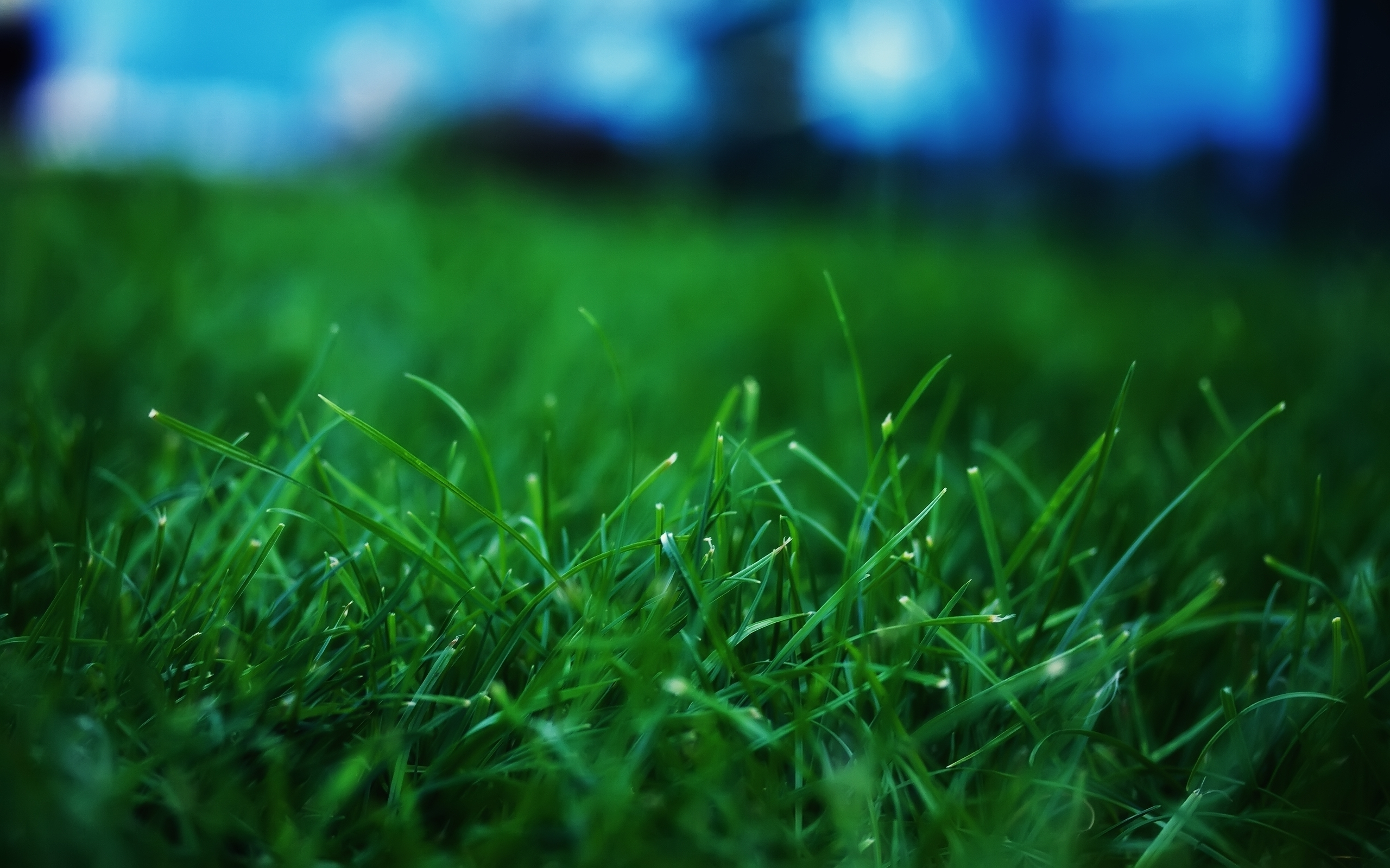 Grass Background Images  Pixabay  Download Free Pictures